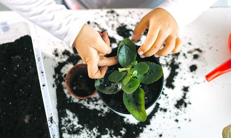 How To Do Indoor Gardening: A Quick Guide