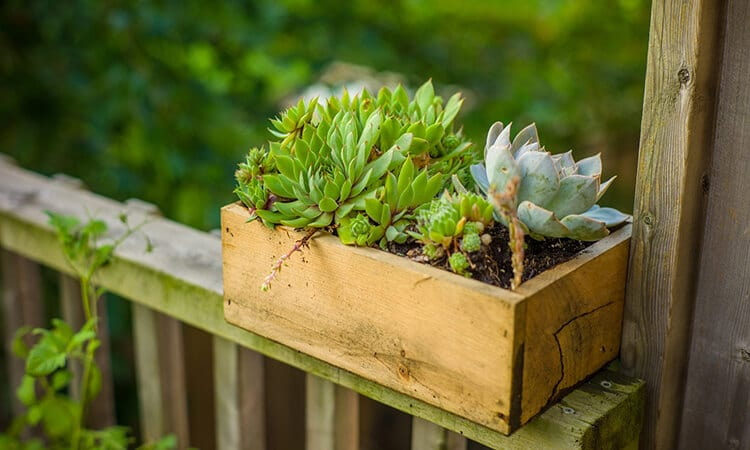 The 7 Best Garden Planter Boxes For Limited Garden Spaces