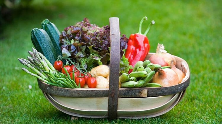 The 7 Best Garden Trugs For Collecting Harvest