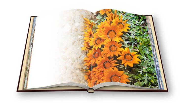 The 7 Best Gardening Books For Beginners