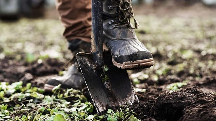 The 7 Best Gardening Shoes For Men
