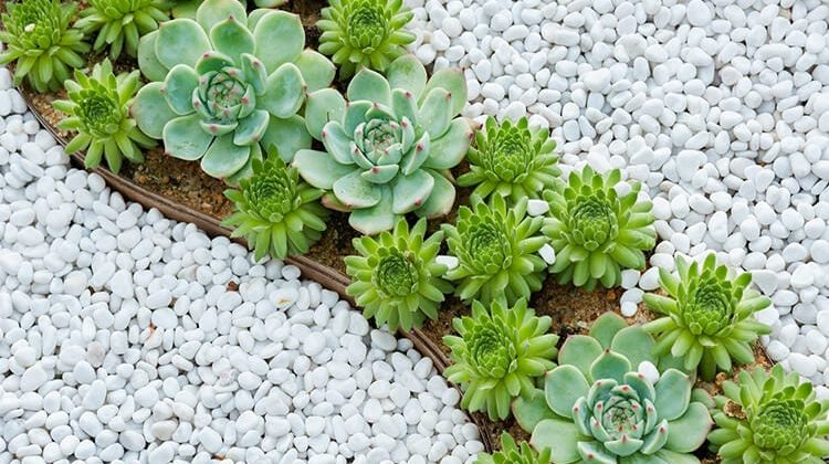 The 7 Best Pebbles For Garden Use
