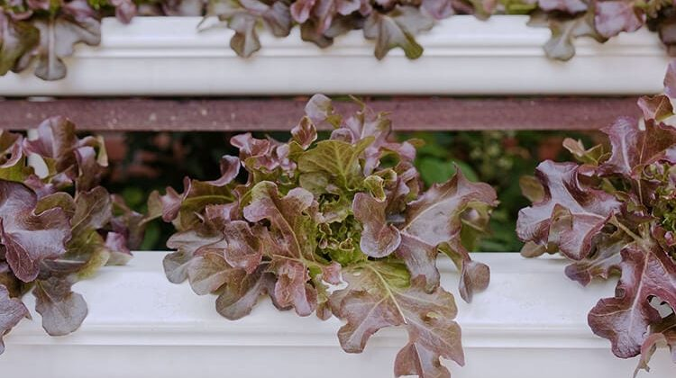 Why Is Vertical Gardening Important? – Cool Gardening Tips